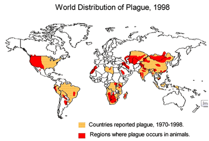 the us will average a few cases a year in the midwest eric york an arizona wildlife biologist died of a plague infection on the 9th of this month as